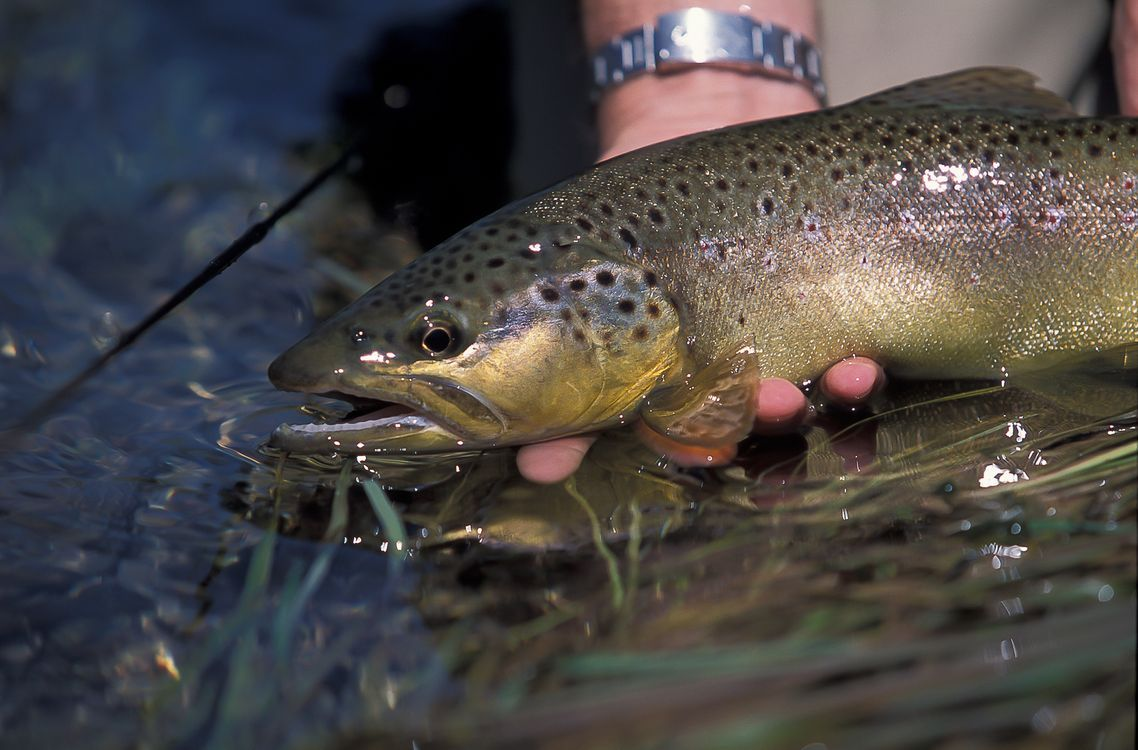 fly fishing in Slovenia (8).jpg