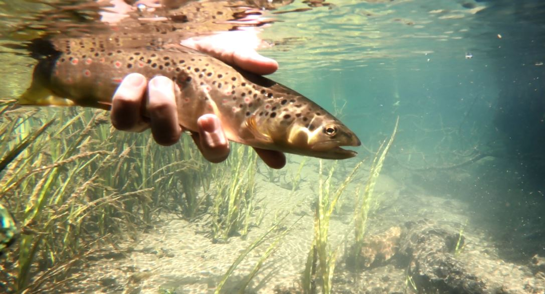 trout fly fishing slovenia.JPG