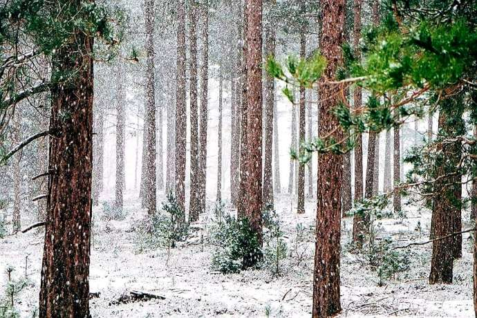 First Snow in the Forest