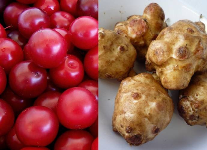 Recipes for Jerusalem Artichokes or Cherry Plums Wanted for a Cookbook on Alien Invasive Species in Slovenia