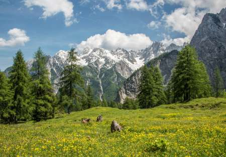 Meadows Under Vrsic Mountain Pass