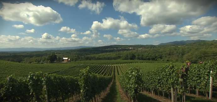 Zidanice Wine Tourism in Dolenjska Benefitting from Vouchers as Foreigners Cancel Bookings