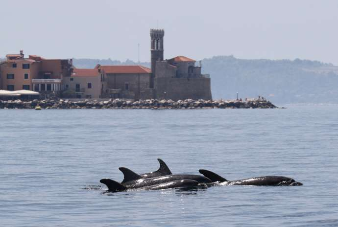 Slovenian Team Finds Dolphins Sharing Bay Based on Time, Not Space