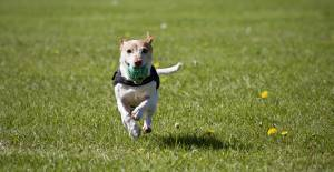 Your dog can run freely.