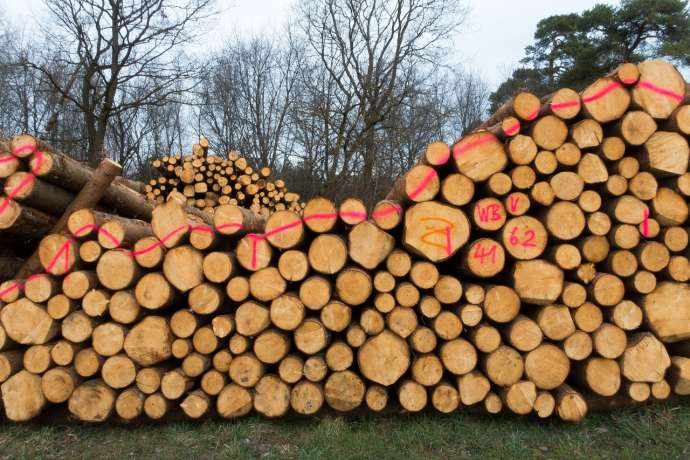 Timber Auction Sees Most Wood Sold Abroad, Around Quarter to China